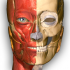 Anatomy Learning – 3D Atlas