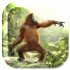 Dancing Monkey HD Live Wall