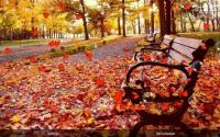 Autumn Live Wallpaper APK