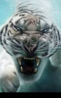 Tiger Live Wallpaper APK