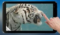 Diving Tiger Live Wallpaper for PC