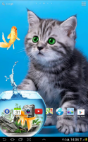 Cat Live Wallpaper for PC