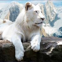 Lion Live Wallpaper for PC