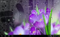Rain Live Wallpaper APK